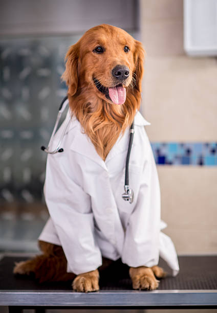 Beautiful dog dressed as a vet